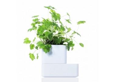 Kit Uno de plantes médicinales Slim - Kigarden