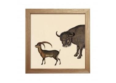 Affiche Demi-bison (tête) avec cadre 15x15 - The Dybdahl Co.