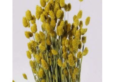 Botte de Phalaris séché jaune - Decofleur