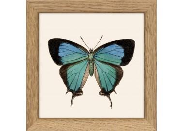 Affiche Papillon bleu et noir avec cadre 10x10 - The Dybdahl Co.