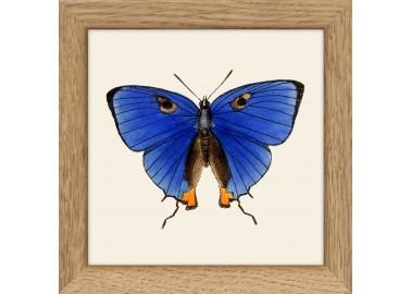 Affiche Papillon bleu avec cadre 10x10 - The Dybdahl Co.