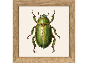 Affiche Insecte vert avec cadre 10x10 - The Dybdahl Co.