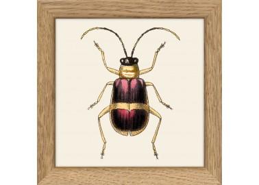 Affiche Insecte violet avec cadre 10x10 - The Dybdahl Co.