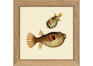 Affiche Deux poissons avec cadre 10x10 - The Dybdahl Co.