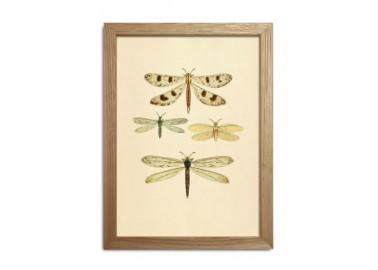 Affiche Insectes avec cadre 15x21 - The Dybdahl Co.
