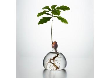 Vase pour mini-chêne - Ilex Studio