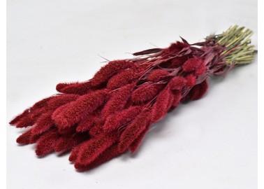 Botte de Setaria séché Rouge - Decofleur