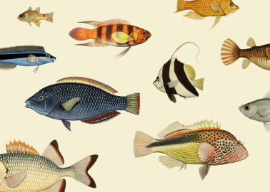 Affiche Poissons 40x30 - The Dybdahl Co.