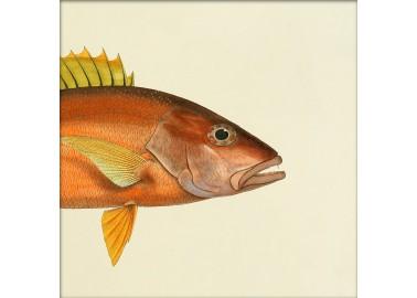 Affiche Demi-poisson orange (tête) - The Dybdahl Co.