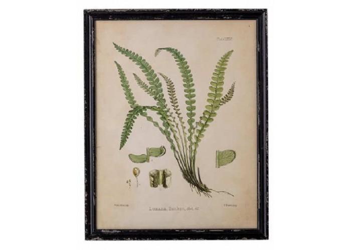 Cadre façon herbier Abeni n°1