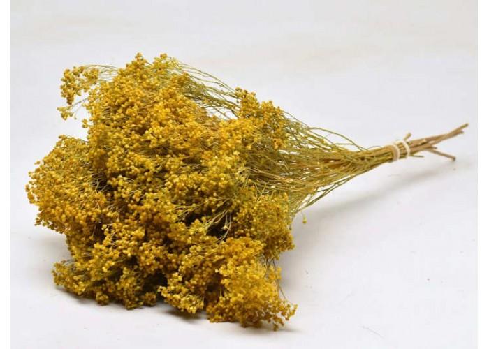 Botte de Broom Bloom séché jaune - Decofleur