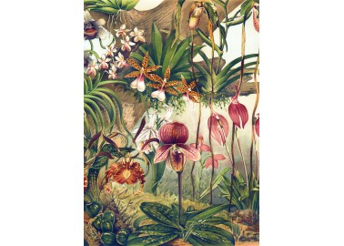 Affiche Orchidées 30x40 - The Dybdahl Co