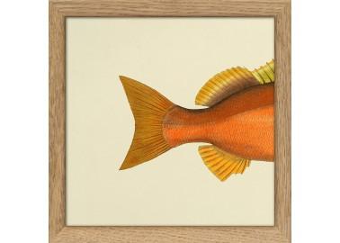 Affiche Demi-poisson orange (queue) avec cadre 15x15 - The Dybdahl Co