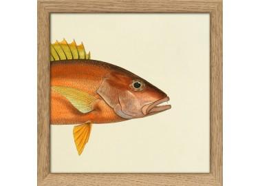 Affiche Demi-poisson orange (tête) avec cadre - The Dybdahl Co