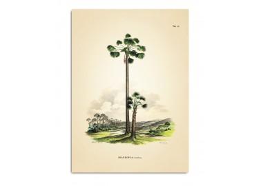 Affiche Mauritia 30x40 - The Dybdahl Co