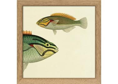 Affiche Demi-poisson vert clair (tête) avec cadre 15x15 - The Dybdahl Co