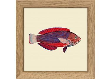 Poisson rouge avec cadre 10x10 - The Dybdahl Co