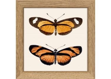 Papillons oranges avec cadre 10x10 - The Dybdahl Co