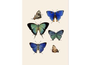 Affiche Papillons 30x40 - The Dybdahl Co.