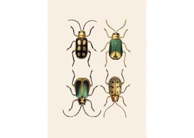 Affiche Quatre insectes 30x40 - The Dybdahl Co.