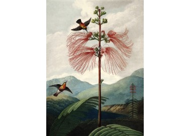 Affiche Tree of flowers 30x40 - The Dybdahl Co.