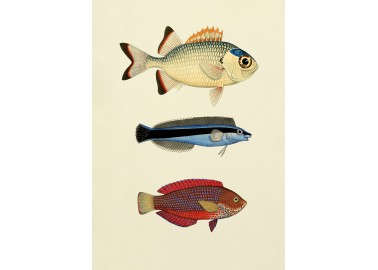 Affiche Poissons 30x40 - The Dybdahl Co.