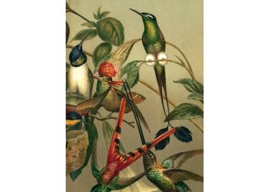 Affiche Hummingbirds 30x40 - The Dybdahl Co.