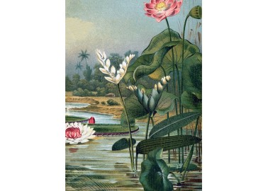 Affiche Water Plants 30x40 - The Dybdahl Co.
