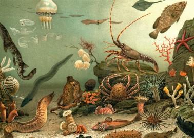 Affiche Aquarium 30x40 - The Dybdahl Co.
