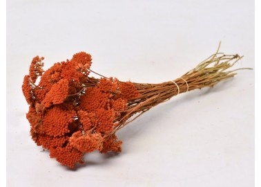 Botte d'Achillea Parker séché orange - Decofleur